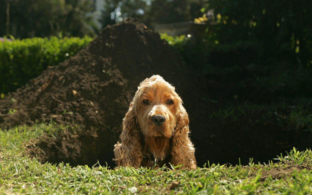 Waarom graven honden?