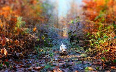 Tips voor een aangename herfstwandeling