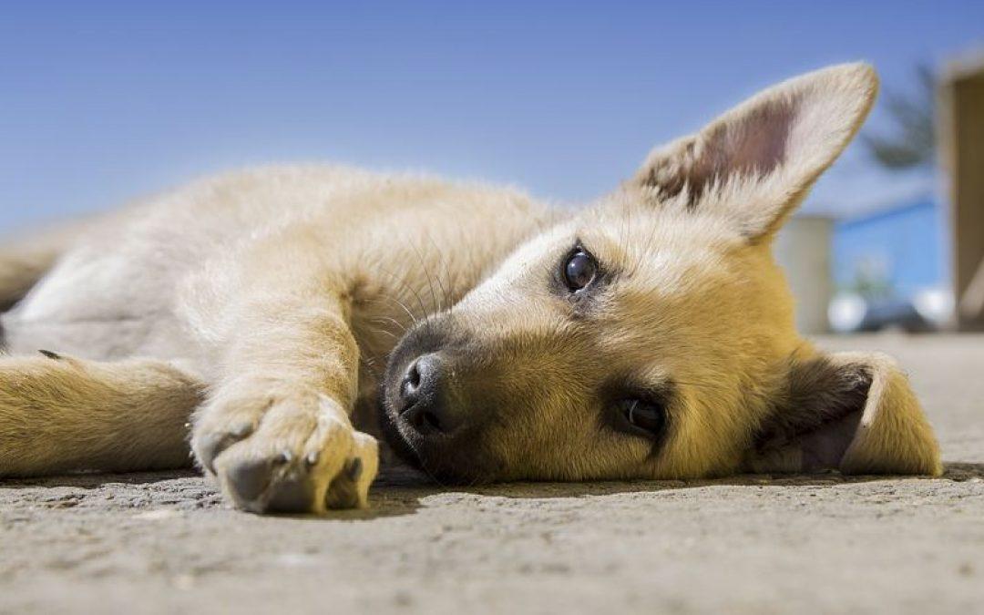 Heeft jouw hond verlatingsangst?