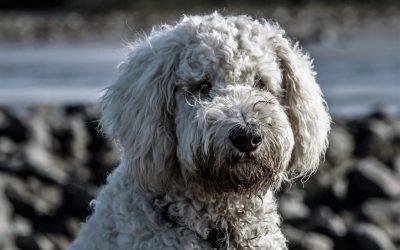 Welke voerbak is geschikt voor jouw hond?