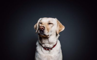 Waarom snuffelt een hond?