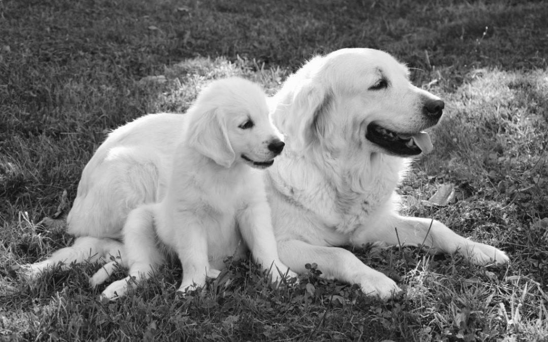 Waarom is het welzijn van de moederhond zo belangrijk?