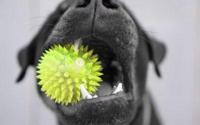 Kijk eens vaker in de mond van je hond.