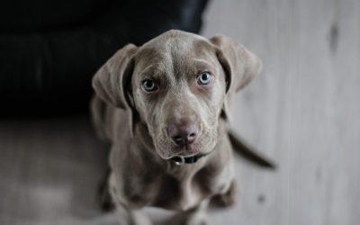 Geef jij je hond persoonlijke ruimte?