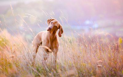 Tools voor loslopende honden terug te laten komen