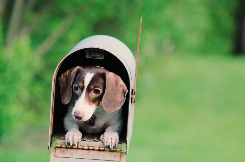 Hond, Baas en Stress